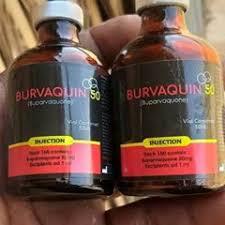 BURVAQUIN
