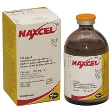 Buy-Naxcel-100mg-Injection-Suspension