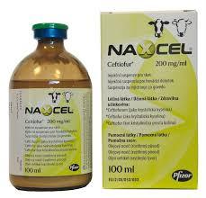 Naxcel 200mg